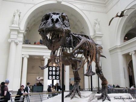 Field Museum T-rex