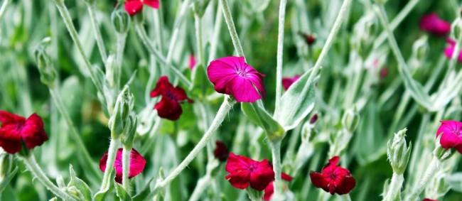 Nove Hrady - Flores