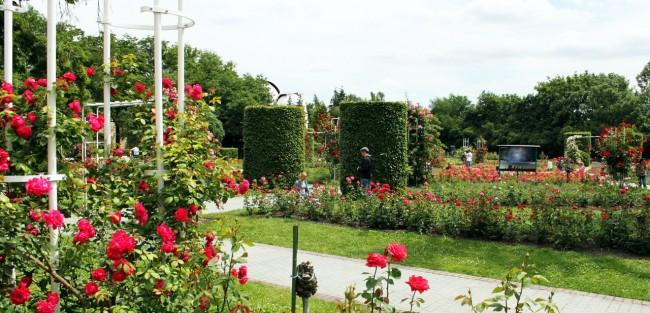 Petrin em Praga - Jardim das Rosas (Rose Garden)
