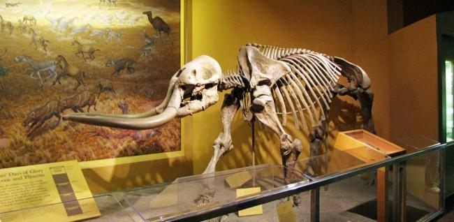 Roteiro de Washington - Museu de História Natural Mamute