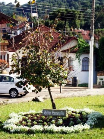 Treze Tïlias - Árvore Tília 2