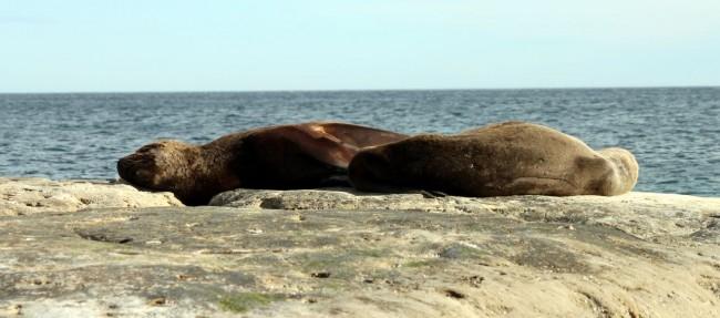 Provincia de Chubut - avistando leoes marinhos