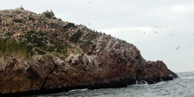 Peru: Ilhas Ballestas e Reserva Nacional de Paracas - 5