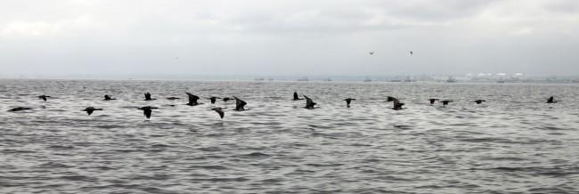 Peru: Ilhas Ballestas e Reserva Nacional de Paracas - 1
