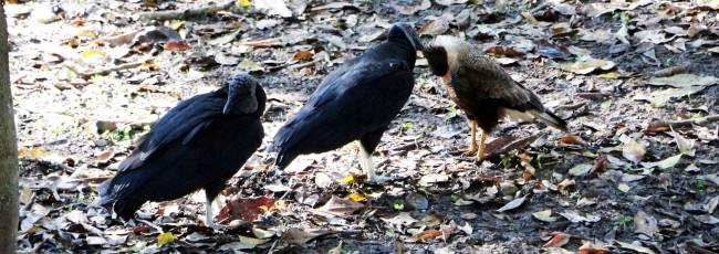 ABC do Pantanal - Pássaros 1