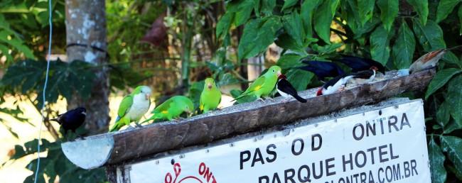 ABC do Pantanal - Pássaros 2