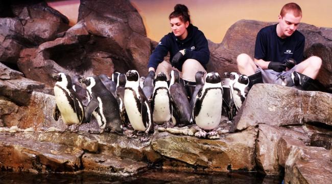 Roteiro de viagem de Atlanta - Georgia Aquarium pinguins