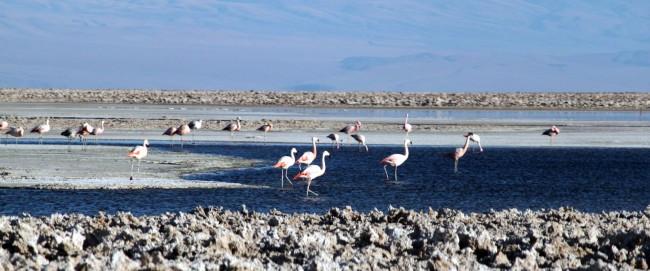 Passeios no Atacama - Salar do Atacama 4