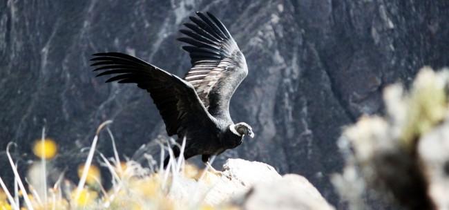 Tour pelo valle del Colca - Arequipa - 16