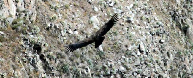 Tour pelo valle del Colca - Arequipa - 18