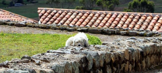 Ruína Inca no Equador - Ingarapirca 8