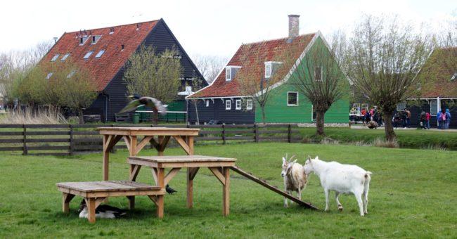 Bate e volta de Amsterdam: Zaanse Schans - 13