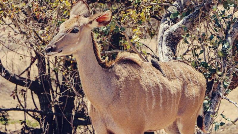Como é fazer um safári na África do Sul - é seguro?
