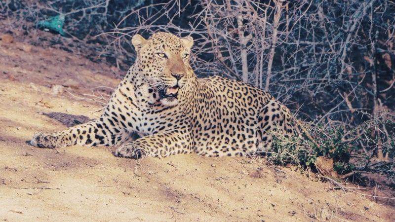 Como é fazer um safári na África do Sul - quais animais?