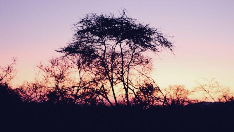 Como é fazer um safári na África do Sul - como escolher