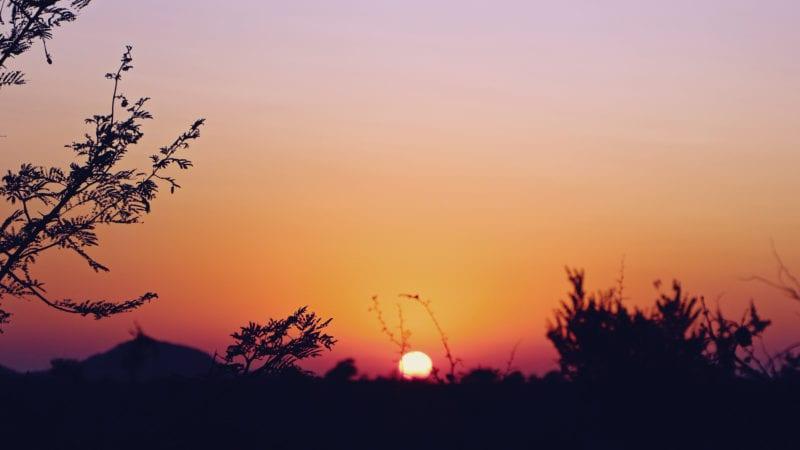 Como é fazer um safári na África do Sul - melhor época