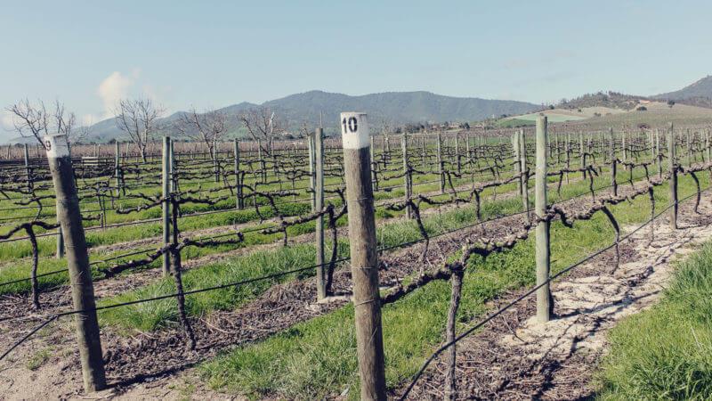Casas del Bosque: vinícola perto de Santiago, no Chile